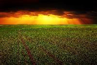 Agricultura pagará retrasos de las ayudas a ganadería y agricultura ecológica