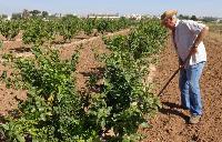 Nueva propuesta para que los jubilados dejen de cobrar la PAC y todo el dinero se destine al agricultor genuino